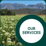 JW Seeds - Our Services